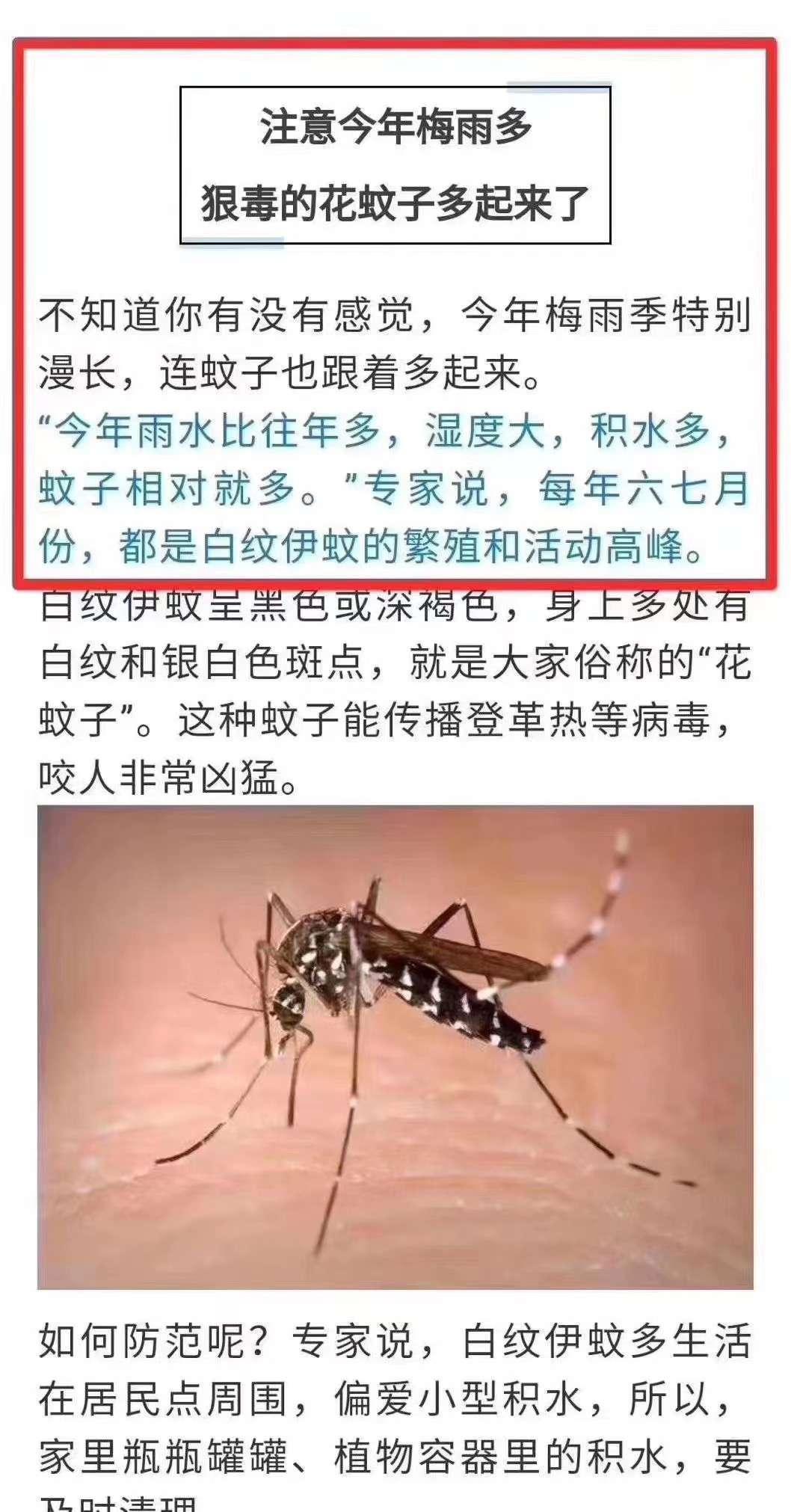 注意!花蚊子出没